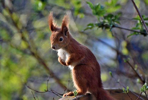 Squirrel, Verifiable Kitten, Rodent