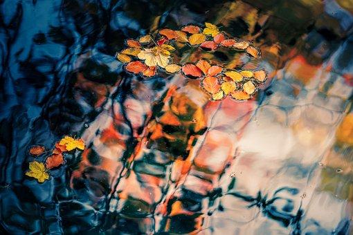 Swim, Autumn Colours, Leaves, Beech Leaf, Beech, Light