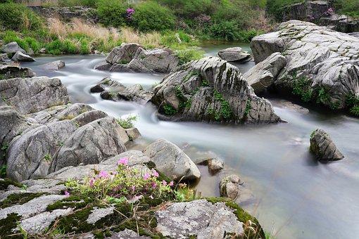Azalea, Brook, Water, Clean, Green, Moss