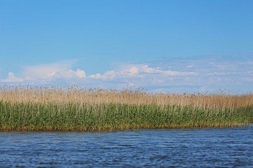 Reed Belt, Blue Sky, Bodden, Gristow, Boat Trip, Water