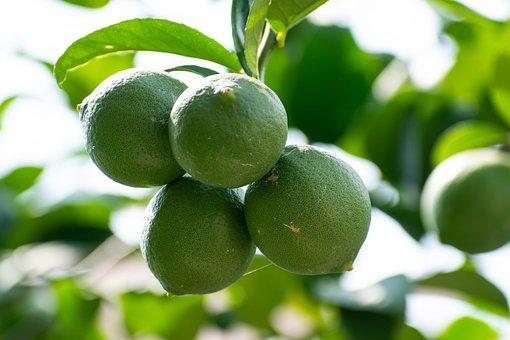 Lemon, Green, Unripe, Citrus, Food, Lemonade, Lime
