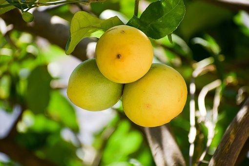 Lemon, Ripe, Lime, Fruit, Healthy, Fresh, Juice, Food