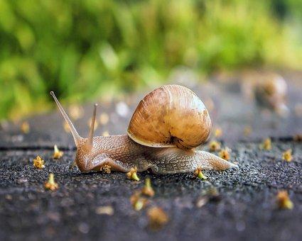 Snail, Shell, Spiral, Molluscum