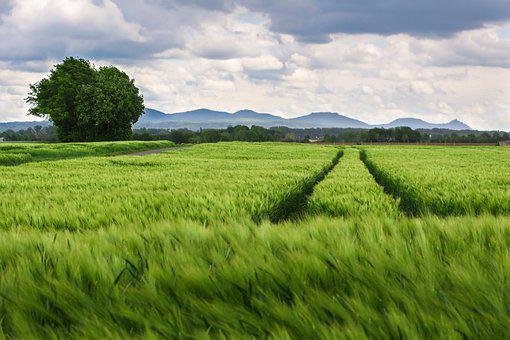 Field, Agriculture, Trace, Mountains, Arable, Cereals