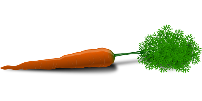 Carrot, Root, Vegetable, Orange, Colorful, Green Leaves