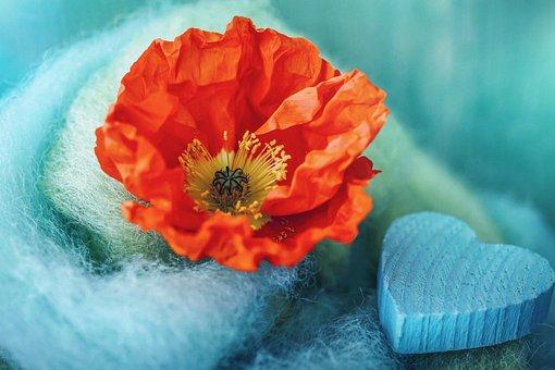 Iceland Poppy, Poppy, Poppy Flower, Mohngewaechs
