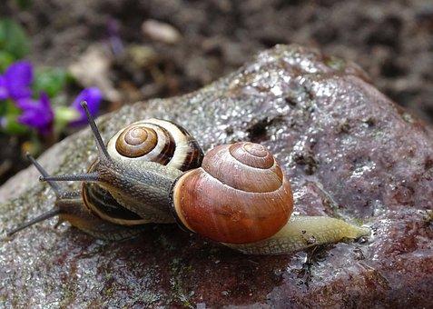 Snail, Shell, Garden Snail, Tape Worm, Slowly, Slimy
