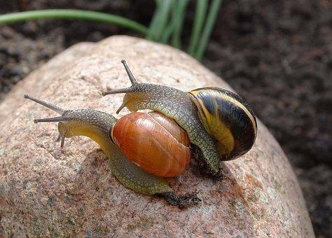 Snail, Shell, Garden Snail, Tape Worm