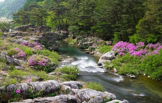 Azalea, Brook, Water, Clean, Green, Moss, Mountain