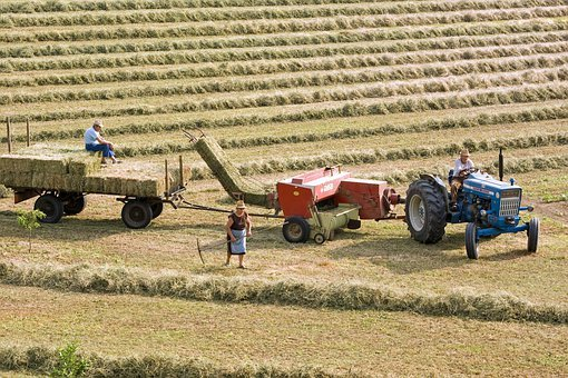 Agriculture, Hay, Field, Campaign, Tractor