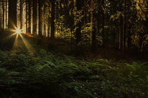 Sunset, Black Forest, Mystic, Light, Fairytale