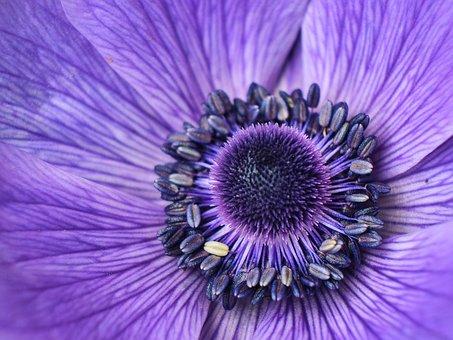 Flower, Summer, Nature, Spring, Garden, Bloom, Flora