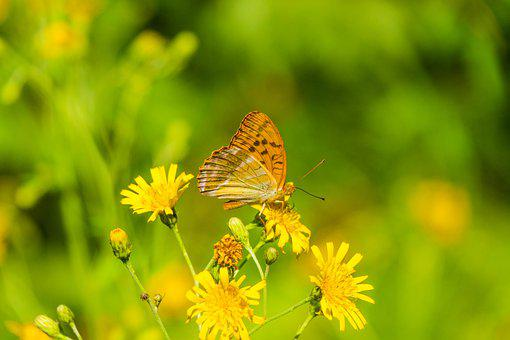 Butterfly, Summer Day, Sunny, Yellow, Green, Flower