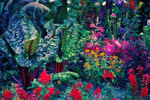 Garden, Vegetables, Leaf, Plant, Bed, Foliage Plants