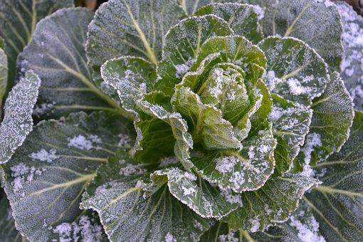 Kohl, Vegetables, Kale, Food, Green