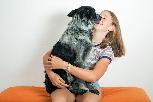 Pet, Dog, Sheep Dog, Girl, Fun, Happy, Love, Animal