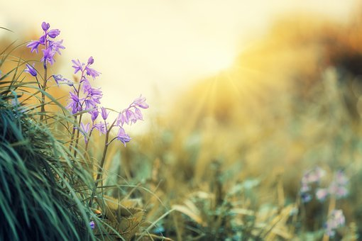 Flowers, Light, Violet, Spring, Nature, Yellow