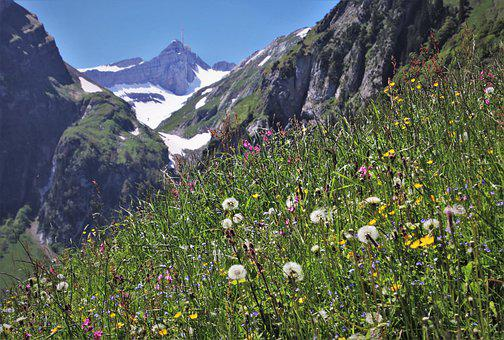 Wild Flowers, Meadows, Mountains