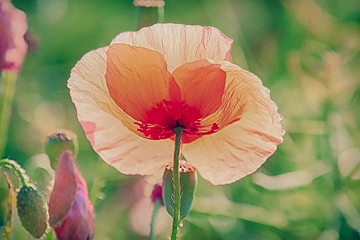 Poppy, Against The Light, Shadow