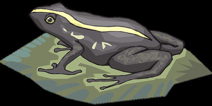 Frog, Amphibian, Rainforest, Jungle, Exotic, Wildlife
