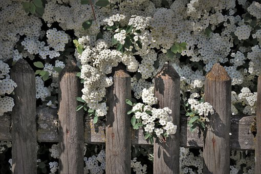 Bush, Flowering, The Fence, Wooden