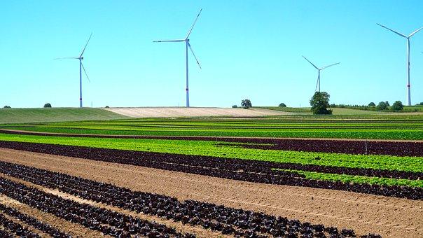 Windräder, Vegetable Field, Energy, Agriculture