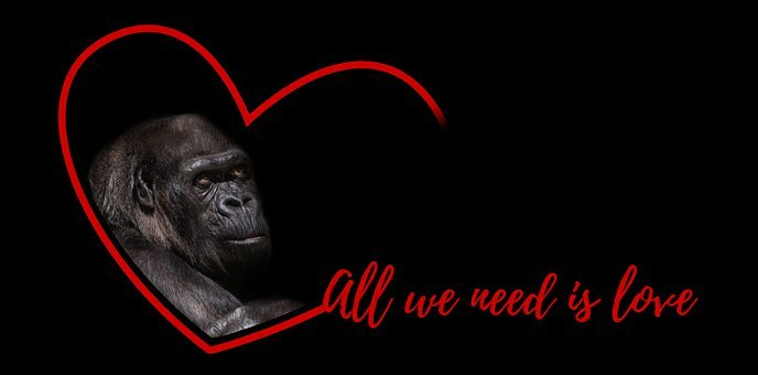 Gorilla, Silverback, Monkey, Animal Welfare, Love