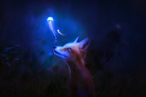 Fox, Coral, Art, Underwater, Water, Blue