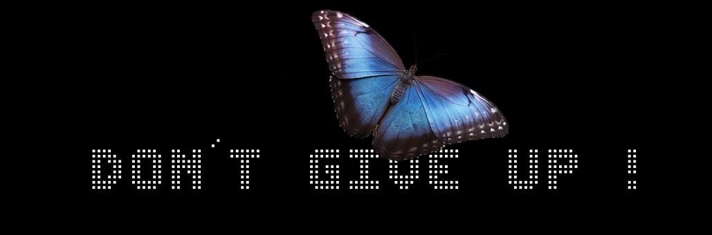 Banner, Header, Butterfly, Development, Courage, Hope