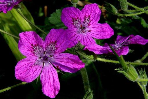 Flower, Color Purple, Plants, Beautiful, Light, Garden