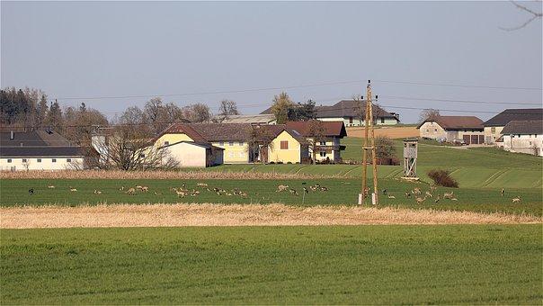 Deer, Roe Deer, Flock, Farmhouse, Farm, Building