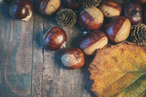Chestnuts, Sheet, Autumn, Nature, Brown, Chestnut, Tree