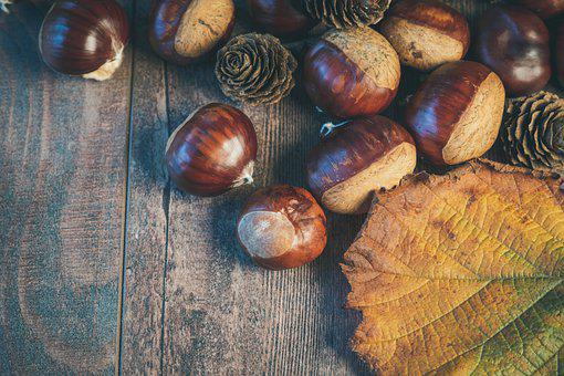 Chestnuts, Sheet, Autumn, Nature, Brown