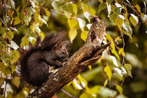 Squirrel, Nager, Wild Animal, Cute