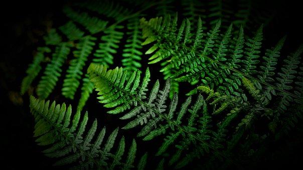 Fern, Green, Forest, Dark, Black Background, Nature