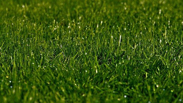 Rush, Morgentau, Grass, Green, Glitter, Drop Of Water