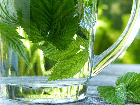 Glass, Tee, Herbs, Wild Herbs, Drink, Herbal Tea