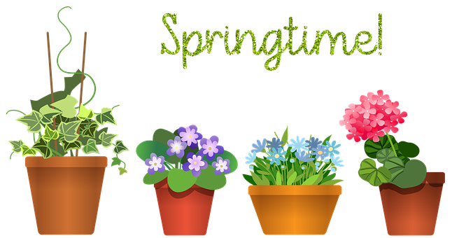 House Plants, Flowerpot, Plant, Green