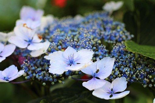 Violet, Spring, Purple, Nature, Flowers, Flower, Plant