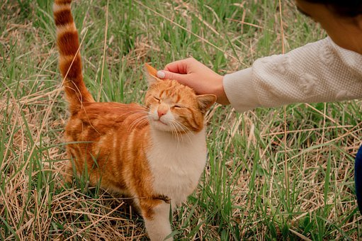 Redhead, Cat, Saffron Milk Cap, Cute, Kitten, Playful