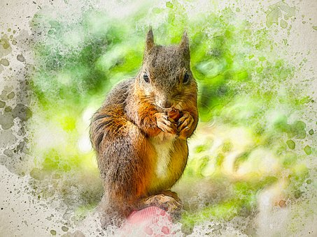 Squirrel, Rodent, Ear Tufts, Sciurus Vulgaris