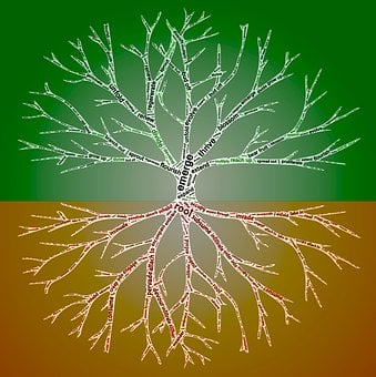 Rooting, Reaching, Branching, Growth, Development