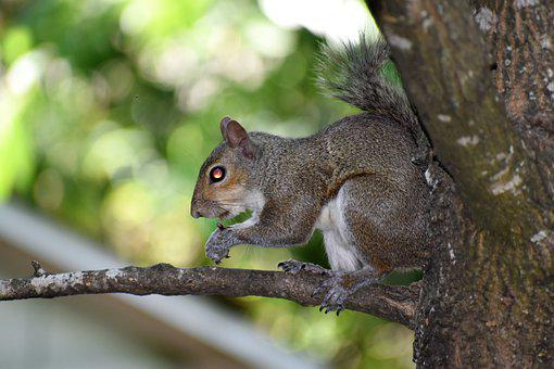 Squirrel, Rodent, Suburb, Cute, Sweet, Wildlife