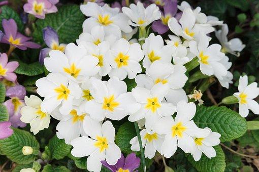 Spring, Flower, Nature, Summer, Green, Garden, Flora
