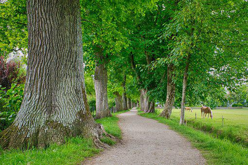 Trees, Avenue, Tree Lined Avenue, Away, Walk, Hiking