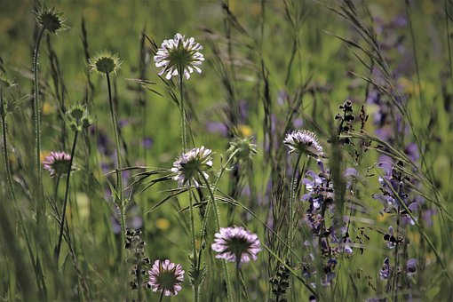 Green, Meadow, Grass, Wild Flowers