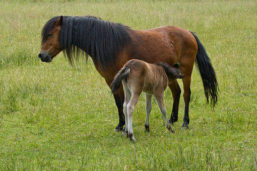 Pony Farm, Foal, Young Animal, Animal, Horse, Mammal