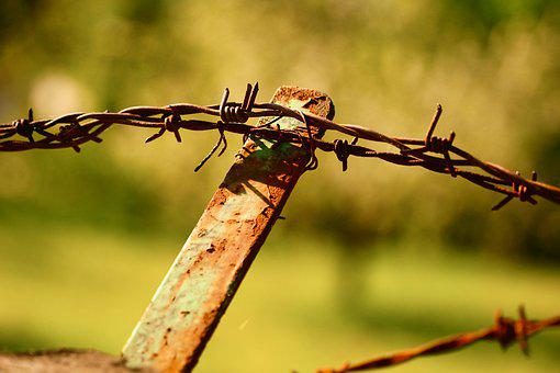 Barbed Wire, Fencing, Wire, Metal, Fence, Demarcation