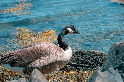 Animal, Beach, Beak, Beautiful, Beauty, Bird, Black