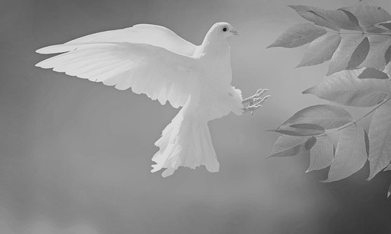 Dove, Nature, Bird, Animal, Wings, Flying, Pigeon
